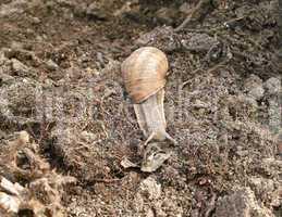 Snail in motion