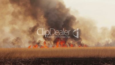 Wildfire in the fields