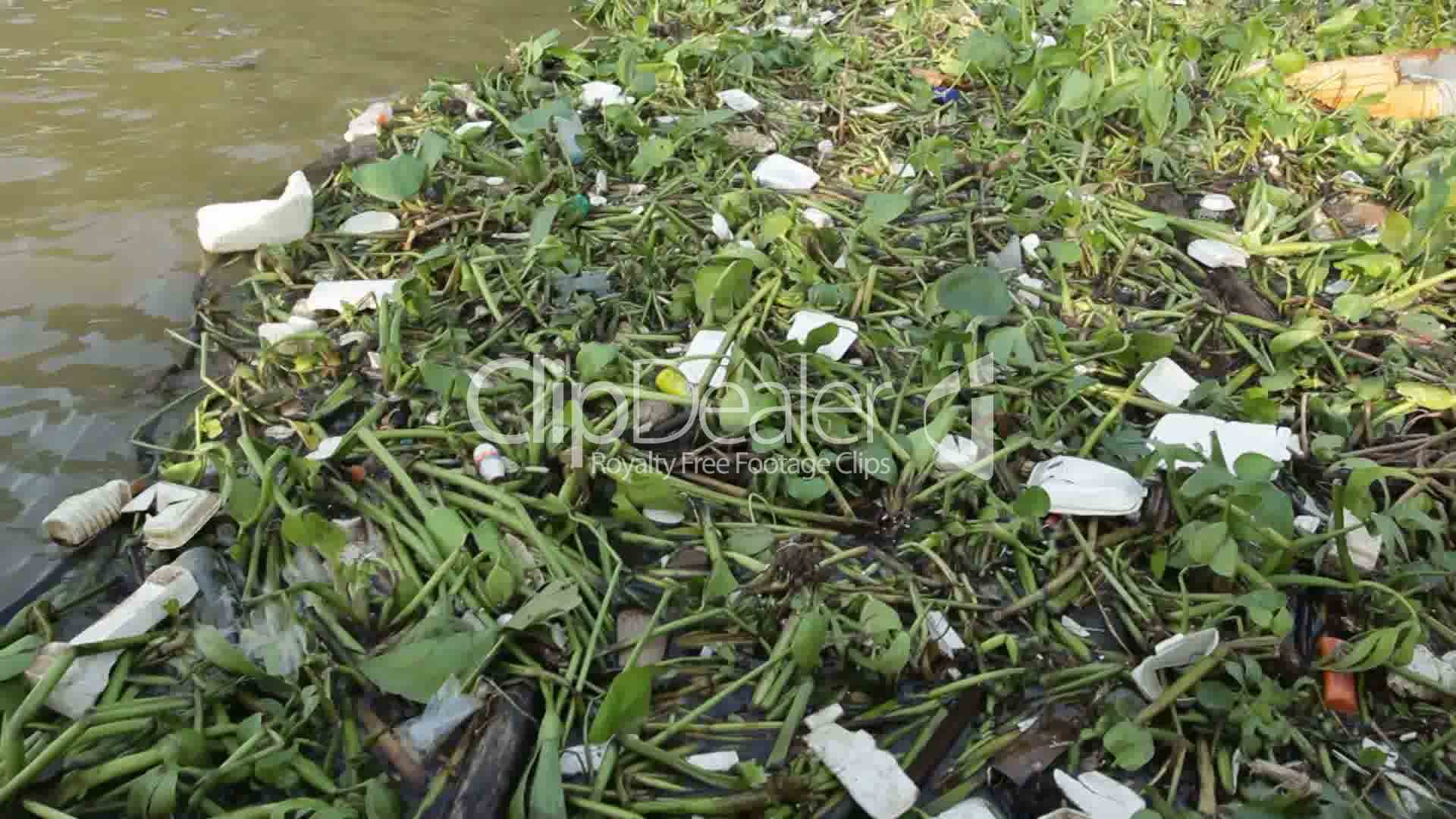 research plastic pollution in water Central pollution control board the environmental damage due to mismanagement of plastic waste is a matter of serious concern.