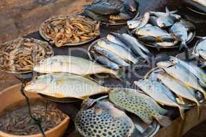 Fischmarkt in Kerala, Indien, Fish market in Kerala, India