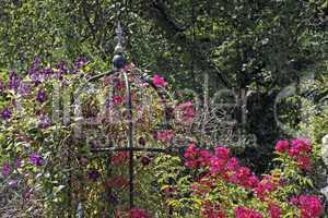 Rosengarten - Rose garden