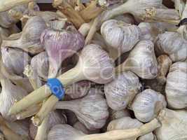 Allium sativum, Knoblauch, Knoblauch-Zwiebeln - Garlic