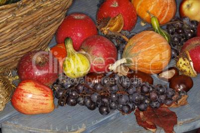 Herbstfrüchte, Cucurbita, Zierkürbis, Kastanien, Weintrauben, Äpfel - Autumn fruits, pumpkins, chestnuts, grapes, apples