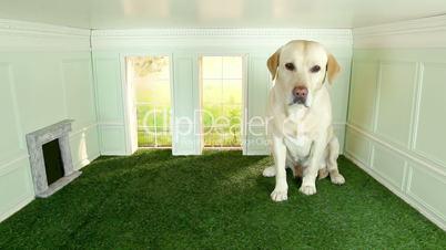 Labrador im Mini-Zimmer