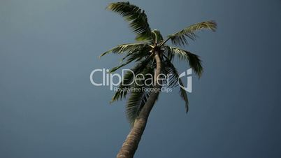 Low angle shot of palm tree in the breeze