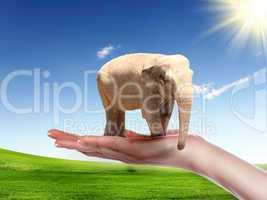 human hand holding Elephant Bull