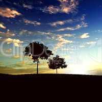 lonely tree on the horizon