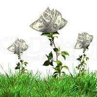 Bush of dollar bills