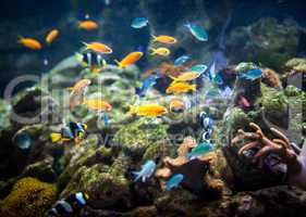 Coral reef and fishes.