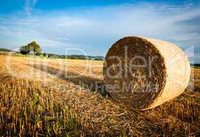 Hay Bale on a harvested Field