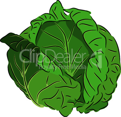 Cabbage.eps