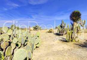 Balboa park in San Diego, cactus garden with desert.