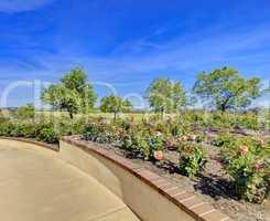 Rose garden in San Diego Balboa park during early spring.
