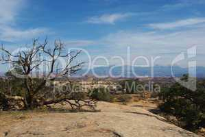 Dry tree on rock plateau with view of high desert and Manti La Sal Mountains, Utah