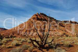 Dry tree with red mountain in Grand Stair Escalante National Monument, Utah