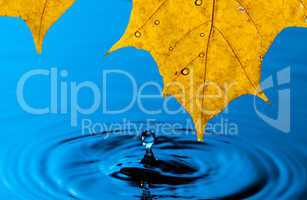 Yellow Leaf and Water Drop