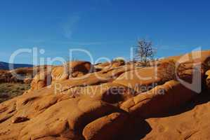 Orange rock hills with dry trees, Grand Stair Escalante National Monument, Utah