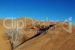 Orange rock hill with white dry tree and shadow, Grand Stair Escalante National Monument, Utah