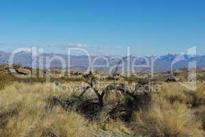 Dry tree and wide view on valleys and distant mountain ranges, Nevada