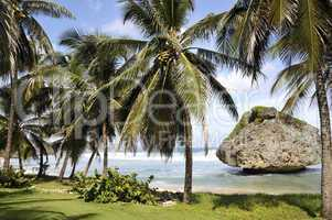 Barbados Caribbean coast