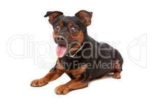 blind mixed breed dog