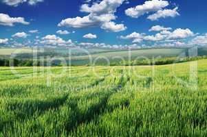 Green field lighted morning sun