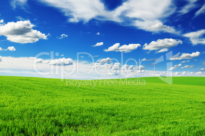 meadow and the beautiful blue sky