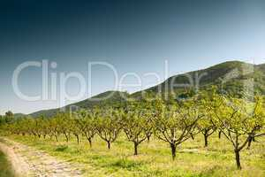 cultivation of fruit trees