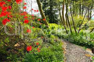 Beautiful Spring garden with red azalea and cobblestones path