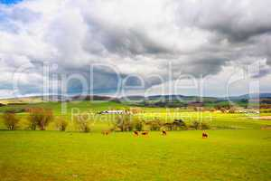 Beautiful rural landscape with grazing cows, hills and trees