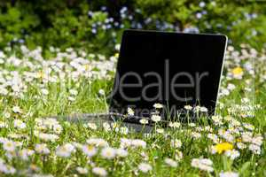 Notebook auf einer Wiese, Notebook on a meadow