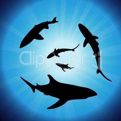 vector  sharks underwater