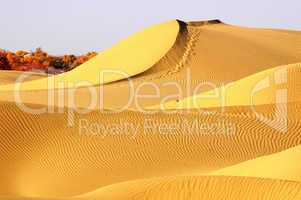 Landscape of golden desert