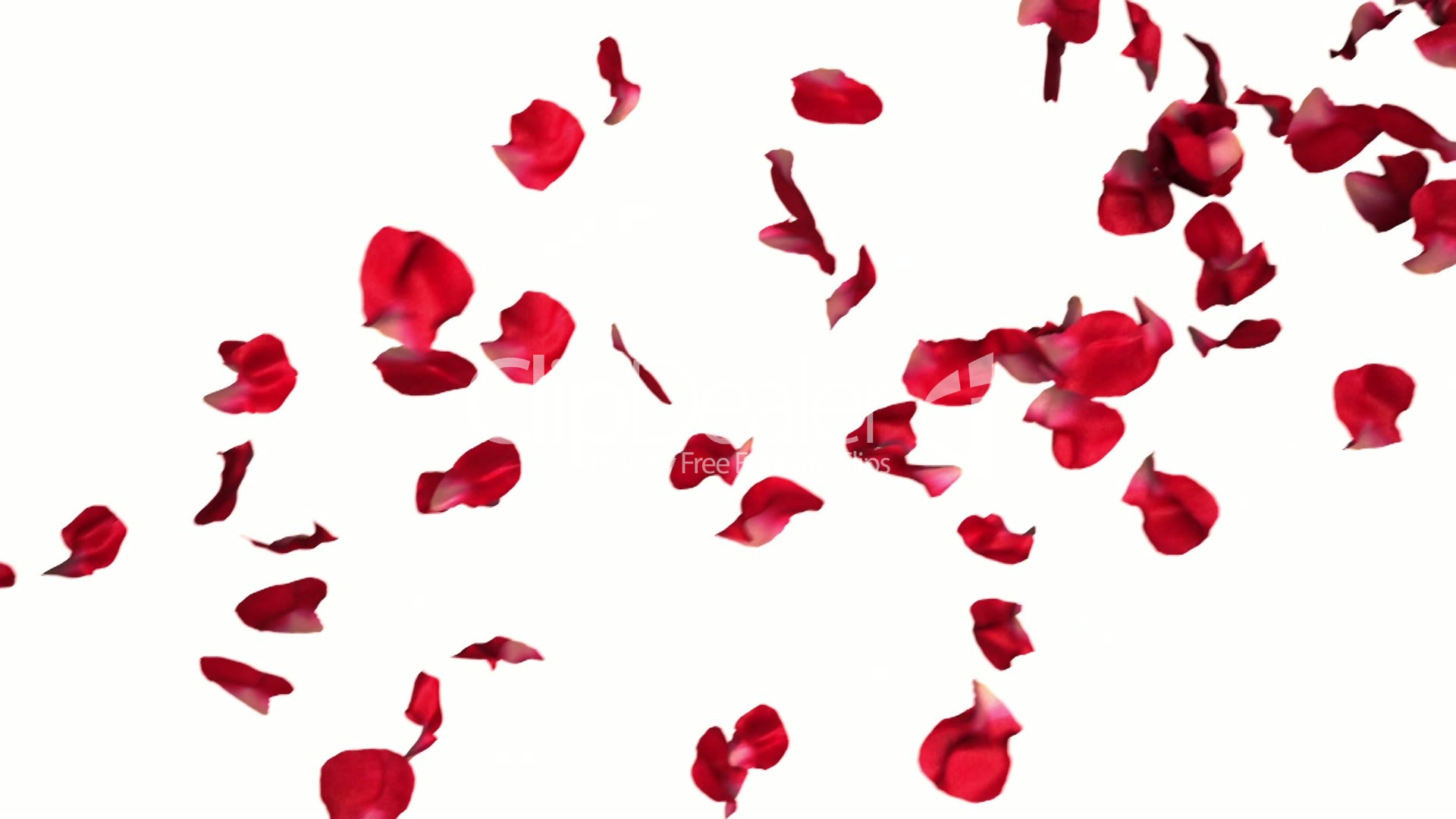 Rose petals falling in slow motion: Royalty-free video and ... Petals Falling From A Flower