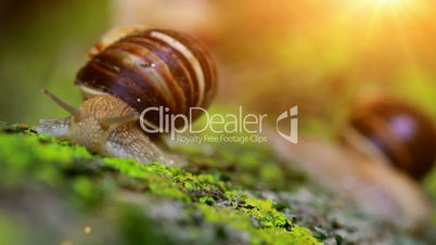 snail closeup in the rays of sun.