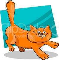 running red fluffy cat