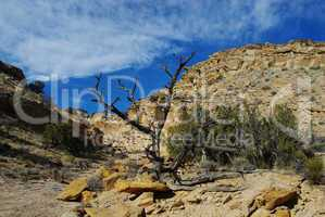 Dry tree and rocks in side canyon near Capitol Reef National Park, Utah