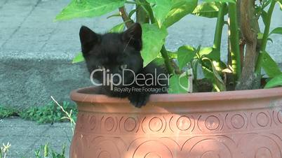 A cat hidden inside a plant pot