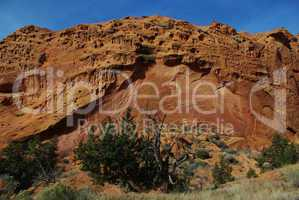 Dry tree with green plants and red rock wall under blue sky, Grand Stair Escalante National Monument, Utah