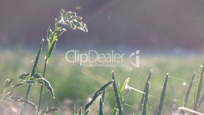 grass on the beautiful meadow hd