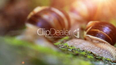 snail closeup in the rays of sun. transfer of focus.