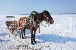 Horse at the bank of frozen river in Russia