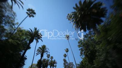 Palm Tree Drive