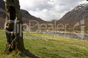 old, hollow tree with grassland and mountains