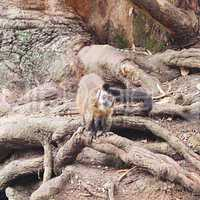 monkeys against a large tree roots in the zoo