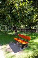 lonely bench in the park under the ficus