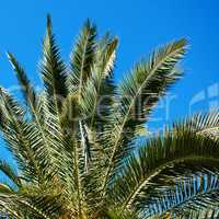 palm tree on the background southern blue sky