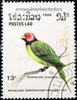 Blossom-headed Parakeet bird stamp.