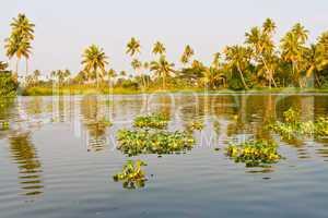 Backwaters in Kerala, Indien, India