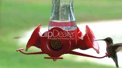Kolibri Futterspender